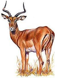 antelope-cover.jpg